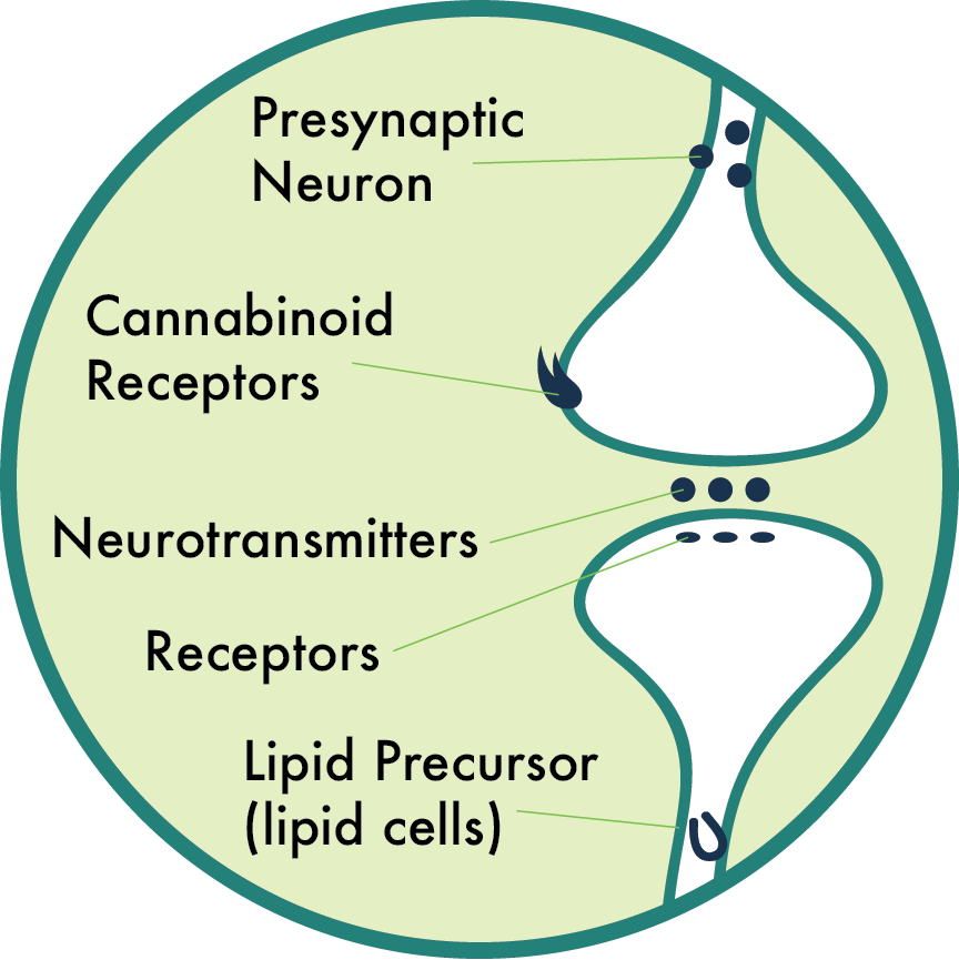neurotransmitter.png