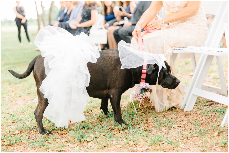 Dog at the wedding ceremony