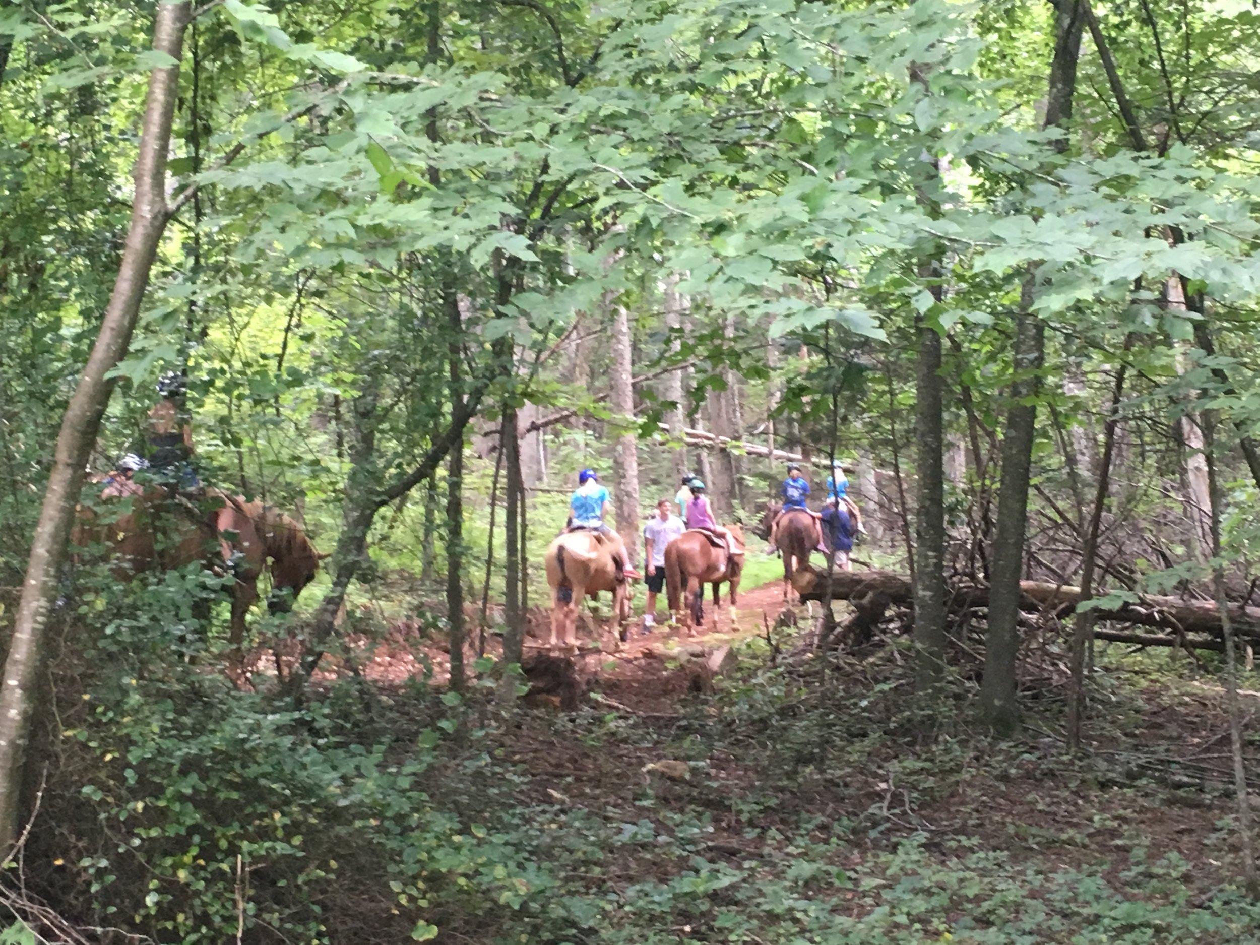 horses campers.JPG