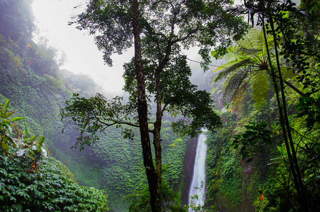 nature-forest-waterfall-jungle.jpg