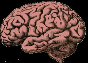 Brain; treat autism spectrum language delays at Canto Speech Therapy Online