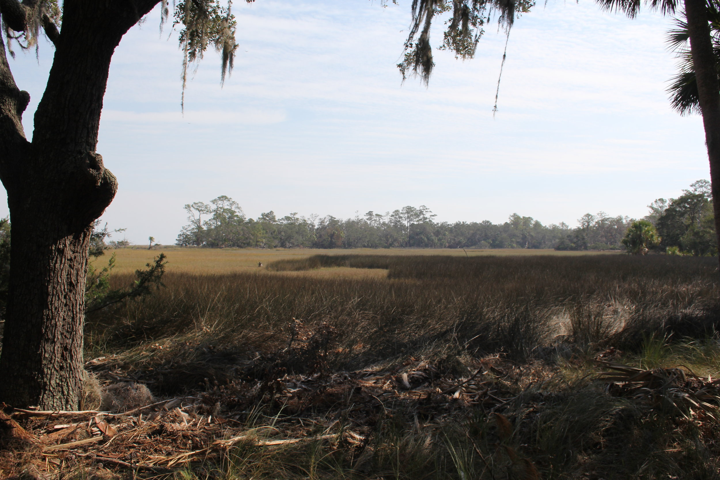 More and more freshwater marshes and maritime forests in Coastal Georgia are being damaged by saltwater.
