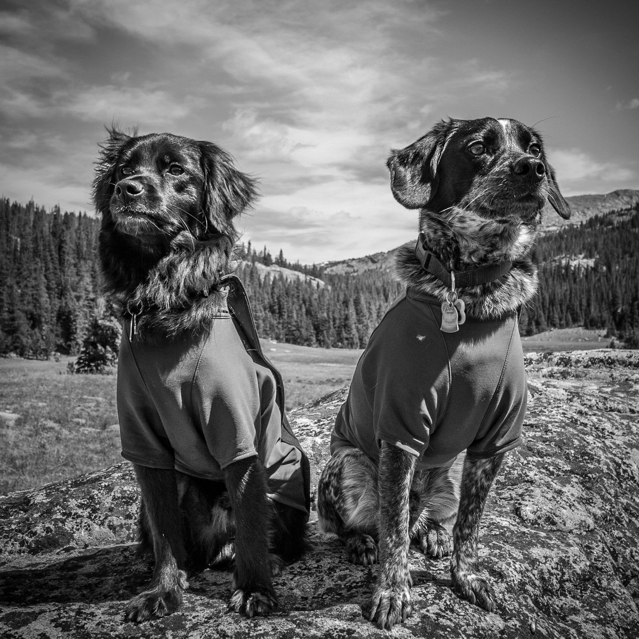Walter and Henry backpacking in the Cloud Peak Wilderness Area in Wyoming.