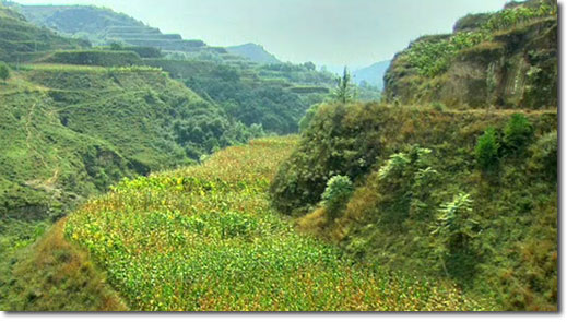 before_after_loess_plateau_02_2011.jpg