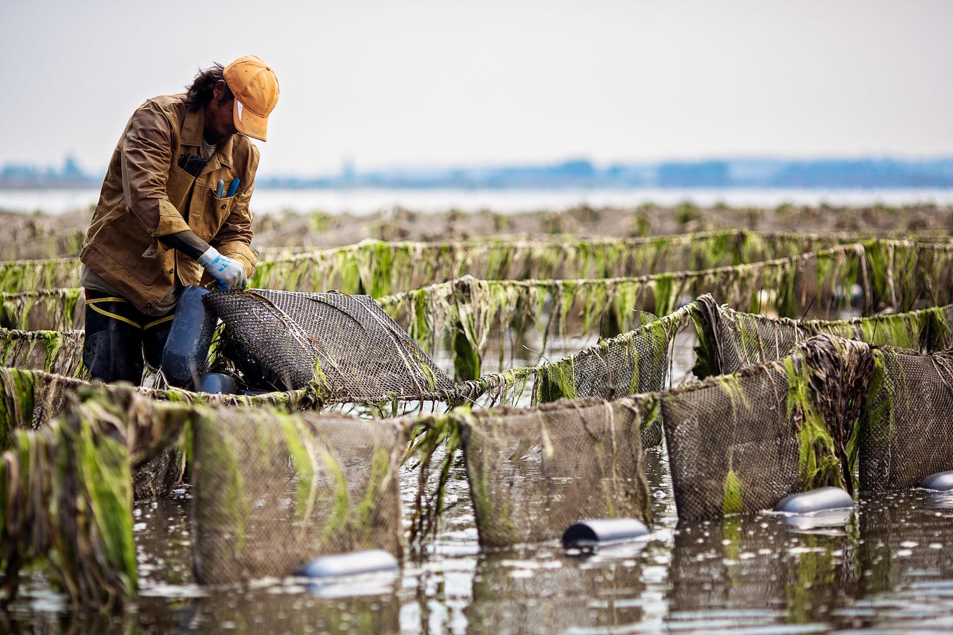 FILSON - Taylor Shellfish Farms