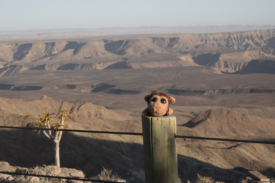 Monkey posing with the Fish River Canyon from Fish River Lodge