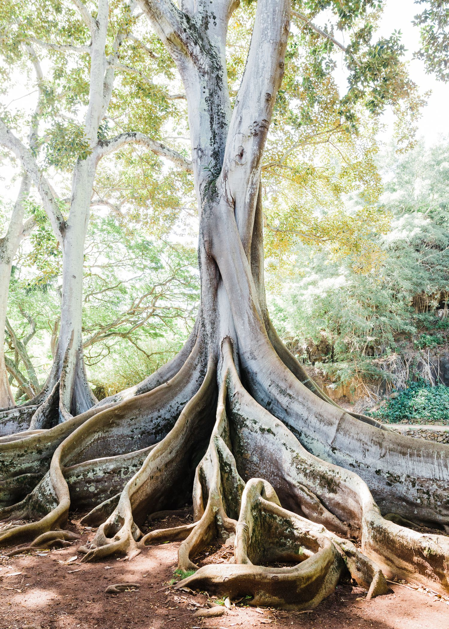 cameron-zegers-seattle-travel-photographer-kauai-botanic-garden.jpg