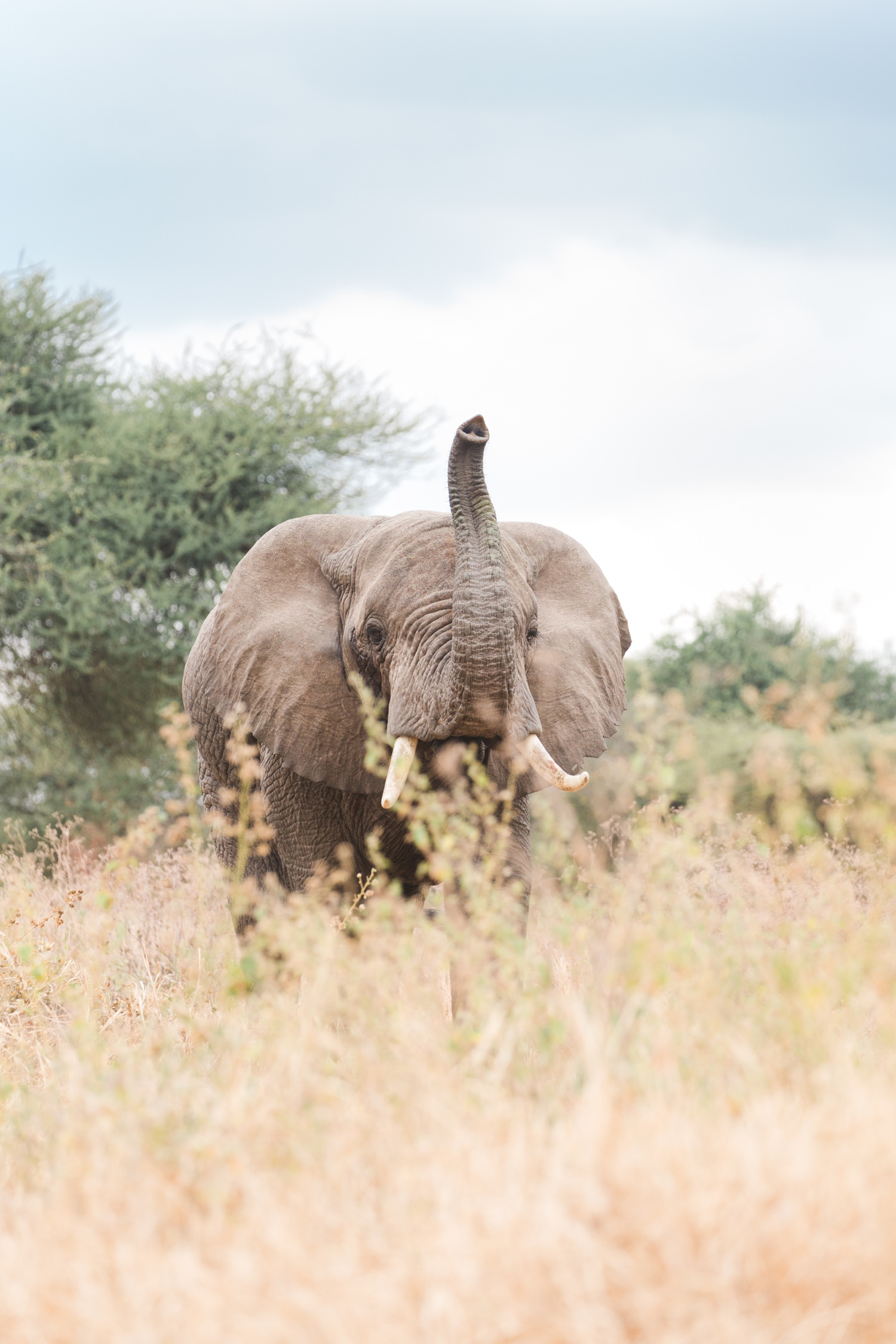 seattle-travel-photographer-tanzania-elephant-national-geographic-expeditions.jpg