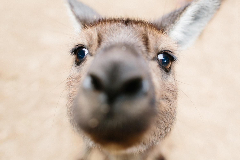 kangaroo-island-australia-travel-photographer-cameron-zegers.jpg