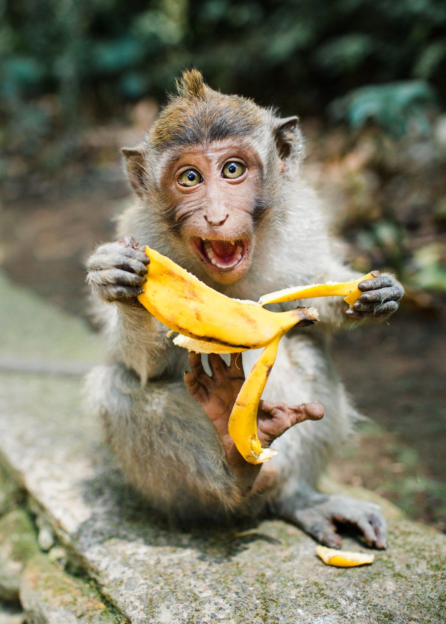 bali-monkey-cameron-zegers-travel-photographer.jpg