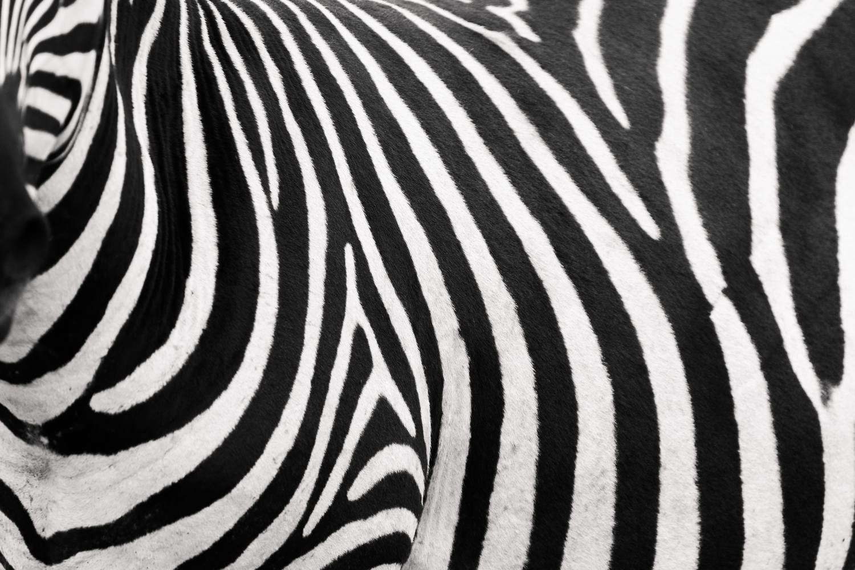 tanzania-nat-geo-student-expeditions-zebra-cameron-zegers.jpg