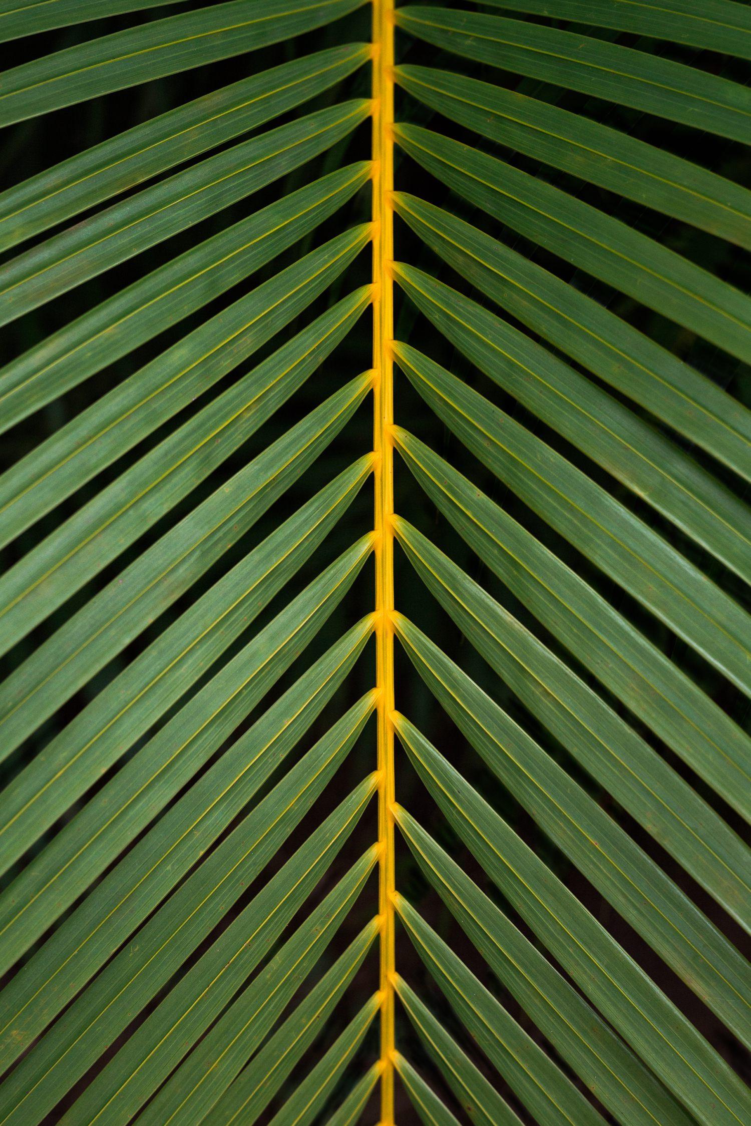 cameron-zegers-photography-hawaii-palm.jpg