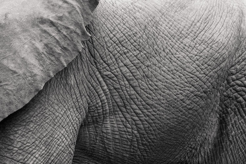 cameron-zegers-travel-photographer-tanzania-elephant-editorial.jpg