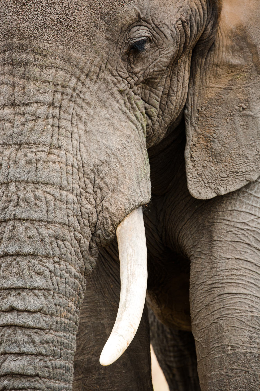 cameron-zegers-travel-photographer-tanzania-elephant-stock.jpg