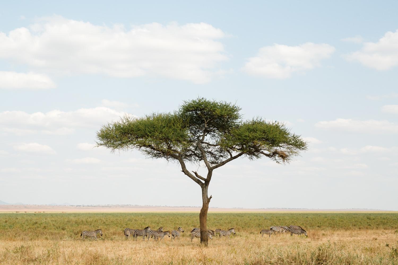 cameron-zegers-travel-photographer-tanzania-national-park.jpg