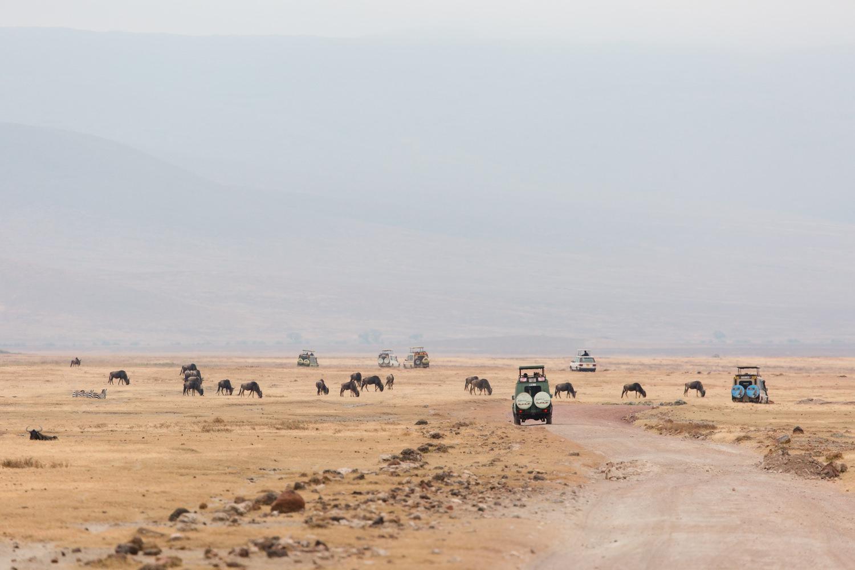 cameron-zegers-travel-photographer-tanzania-safari.jpg