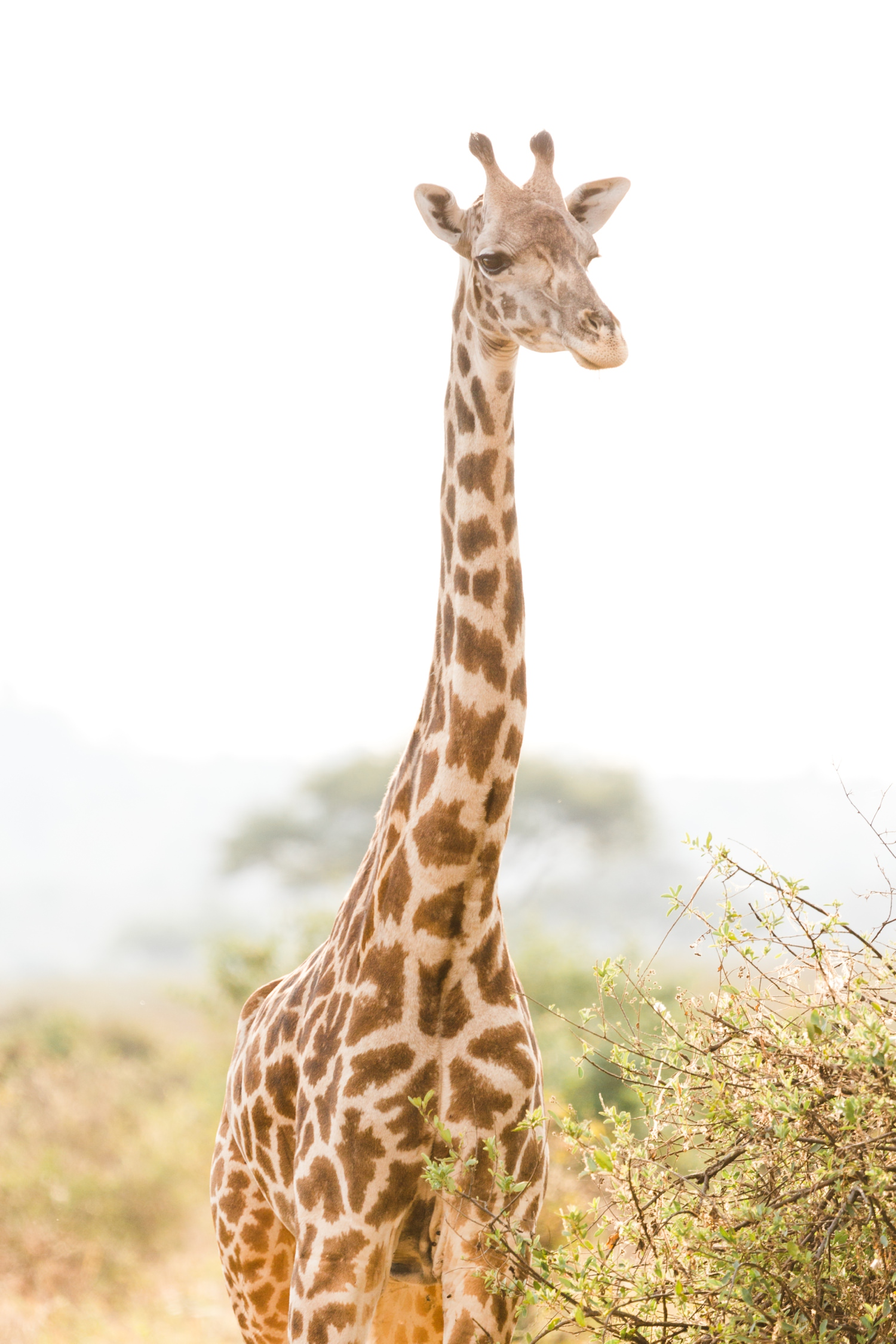 cameron-zegers-travel-photographer-tanzania-seattle-editorial.jpg
