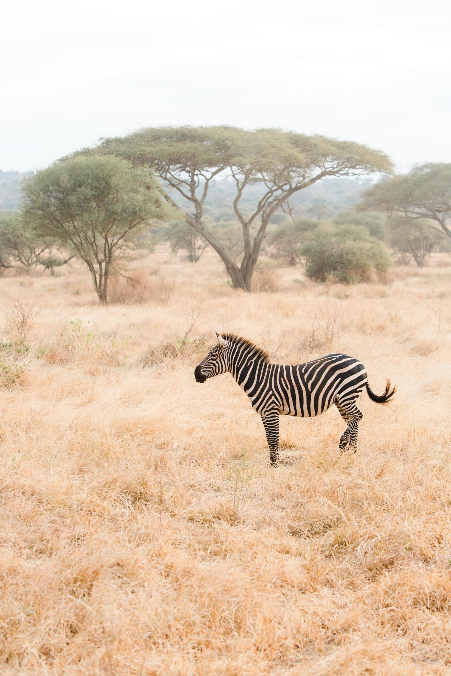 cameron-zegers-travel-photographer-tanzania-seattle.jpg