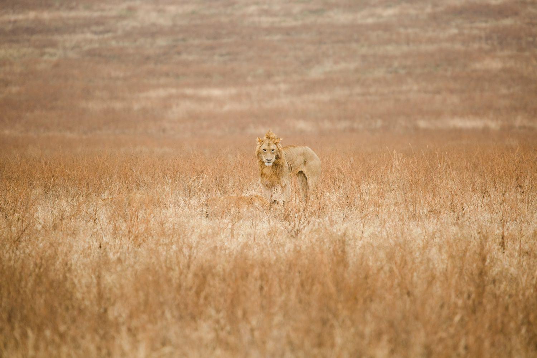 cameron-zegers-travel-photographer-tanzania.jpg