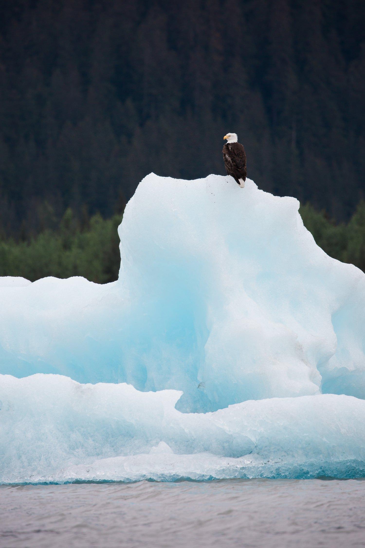 alaska-cameron-zegers-travel-photography-13.jpg