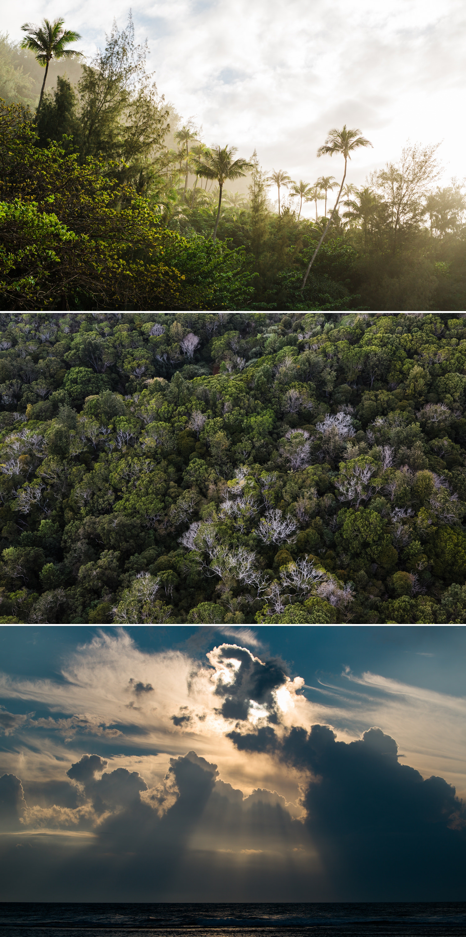 cameron-zegers-photography-travel-hawaii-kauai-12.jpg