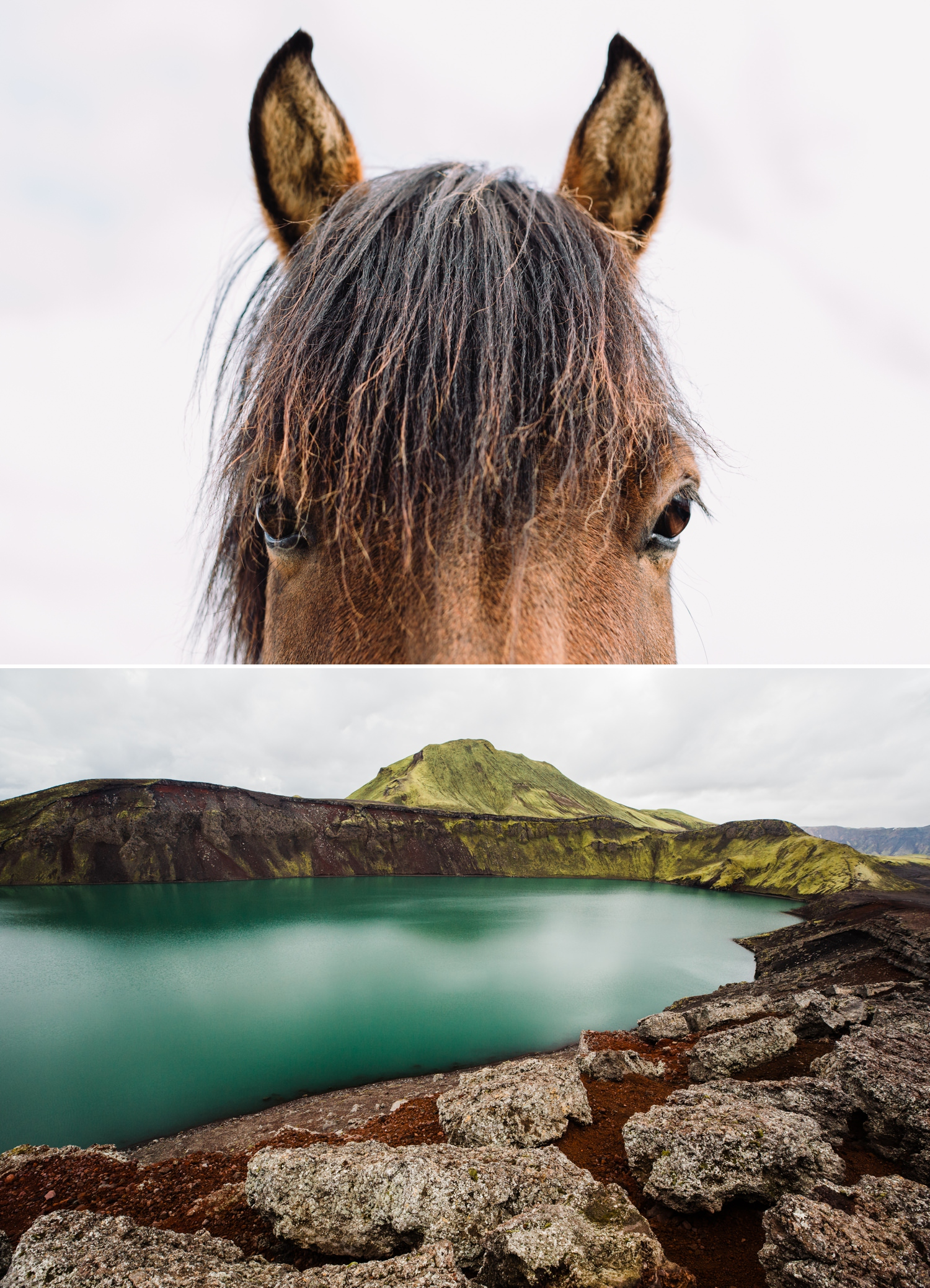 3-icelandic-horse-landmannalauger.jpg
