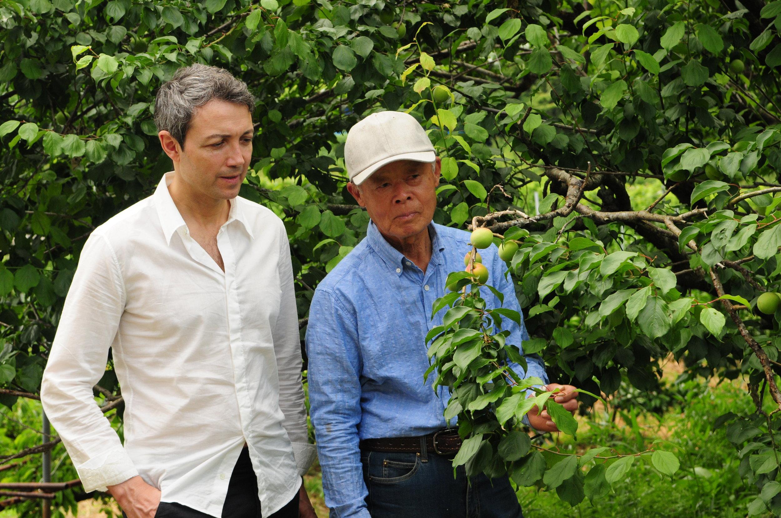 Gianluca Franzoni in Gojiro ume orchard, Tanabe, Japan