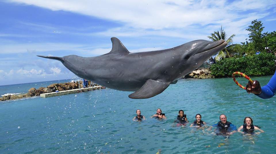 dolphin_cove_ocho_riosBlog.jpg
