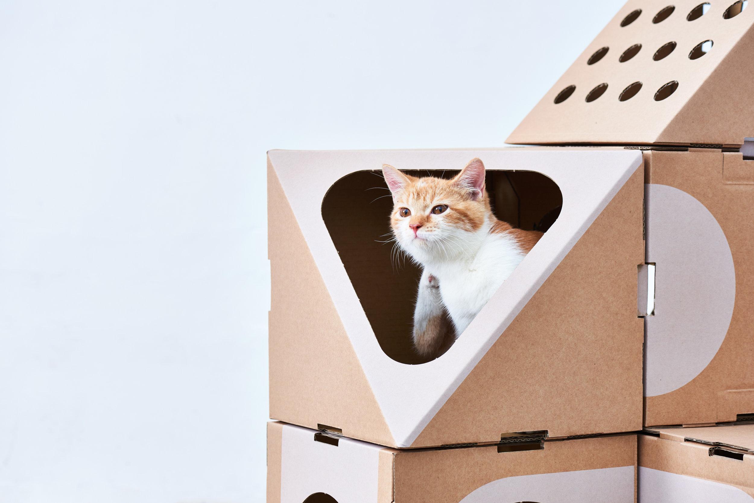 A_CAT_THING_03_CloseUp-002.jpg