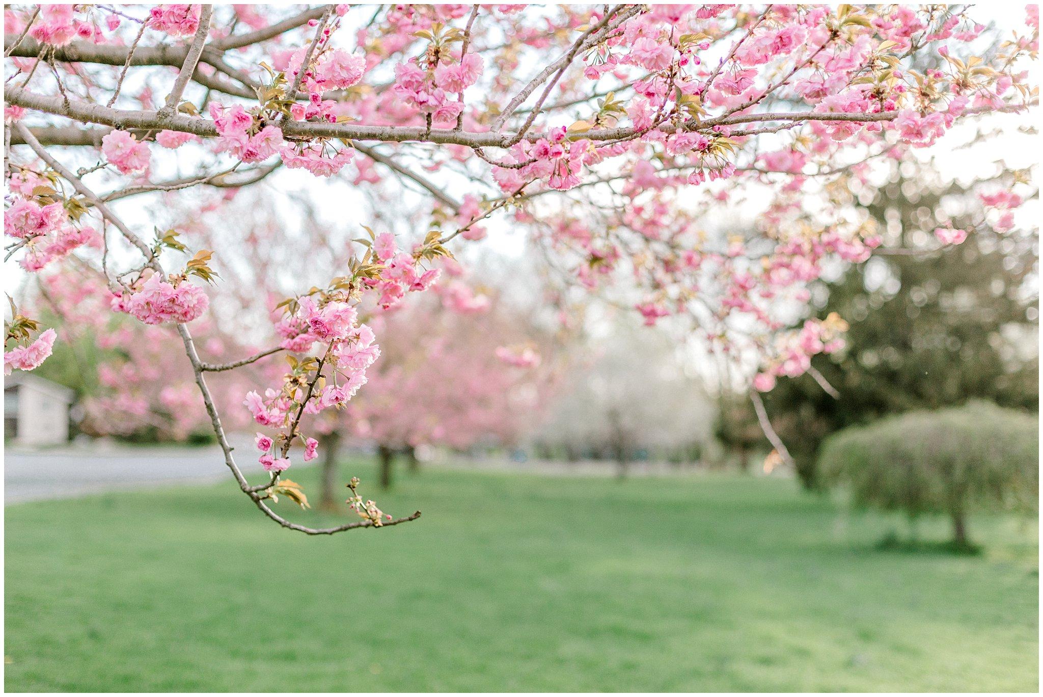 Lehigh Valley Spring Cherry Blossom Engagement Session Pennsylvania Wedding Photographer (25).jpg