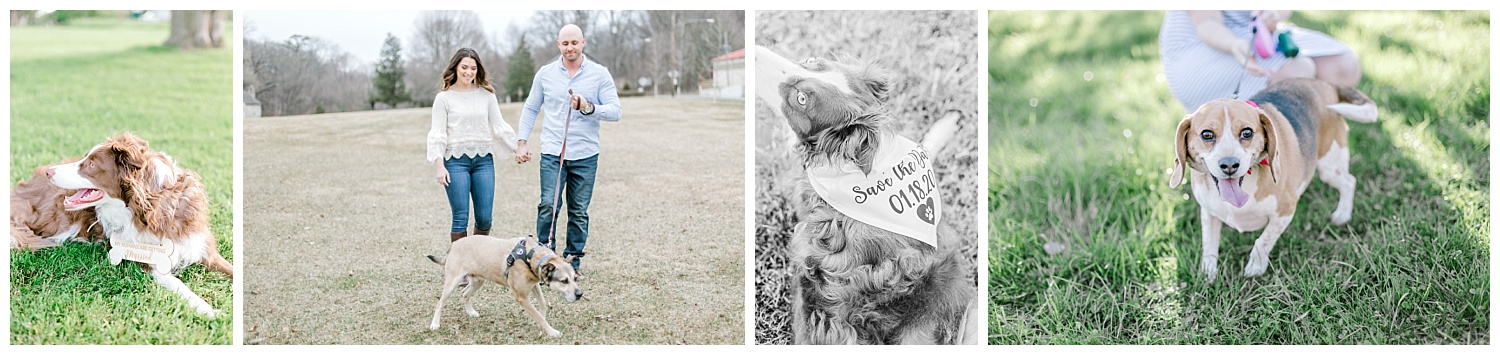 Tips for including your pet in your engagement photos by pennsylvania lehigh valley wedding and lifestyle photographer lytle photography (3).jpg