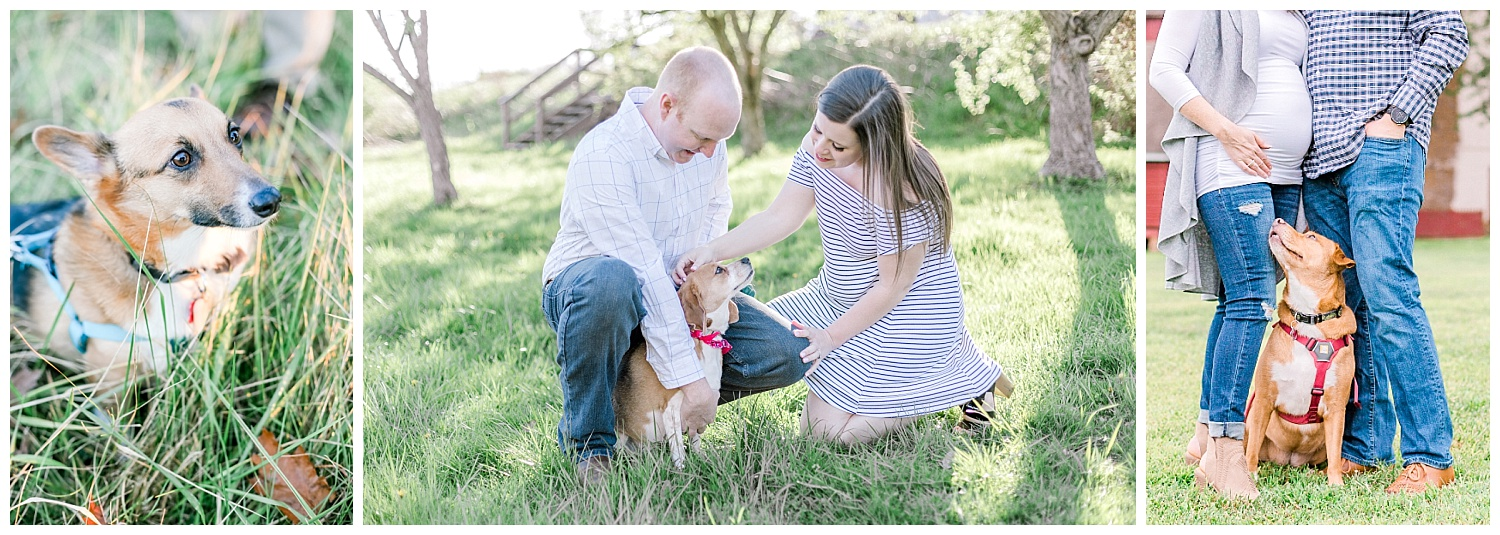 Tips for including your pet in your engagement photos by pennsylvania lehigh valley wedding and lifestyle photographer lytle photography (2).jpg