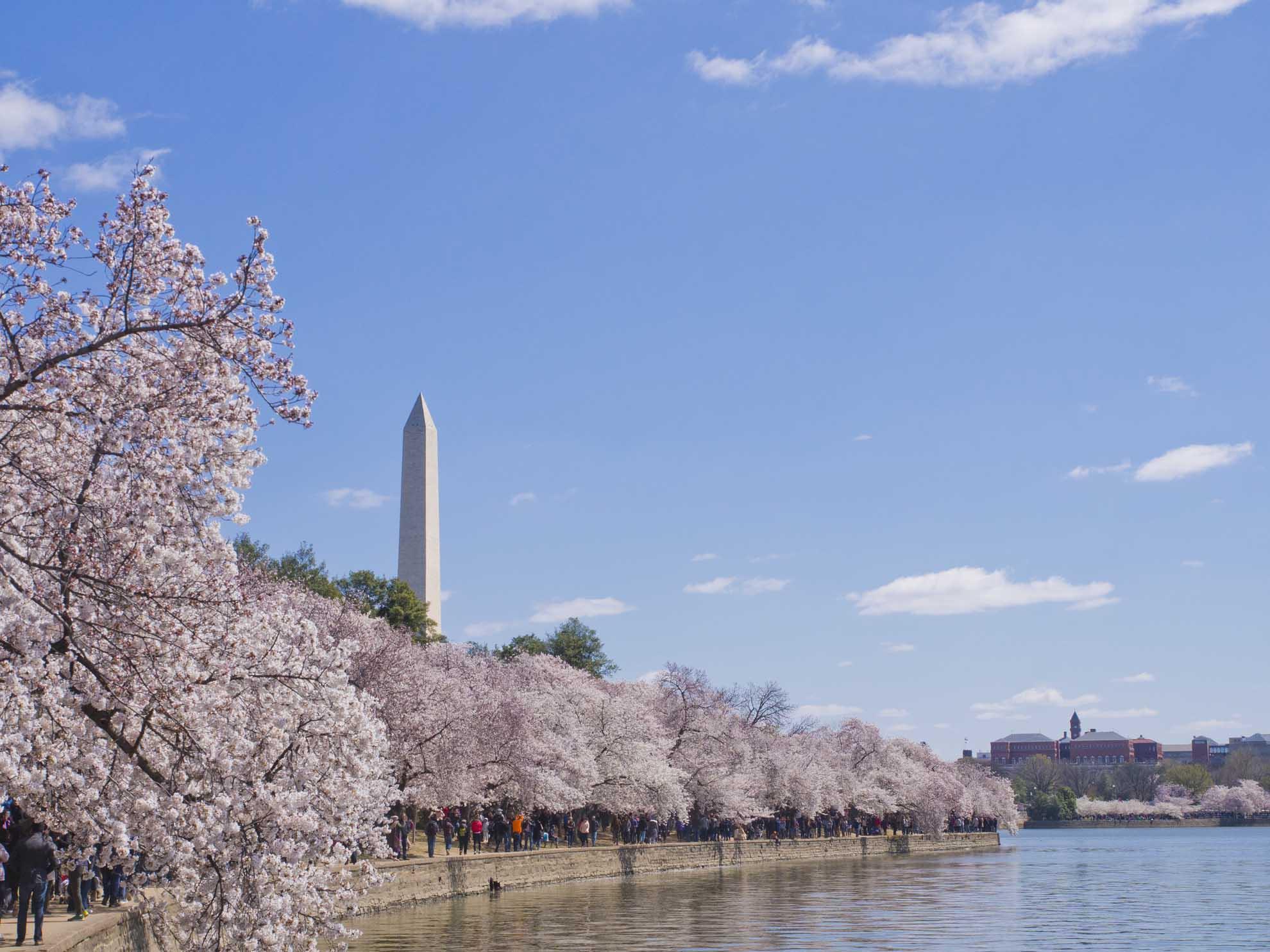 Washington Monument from the Tidal Basin