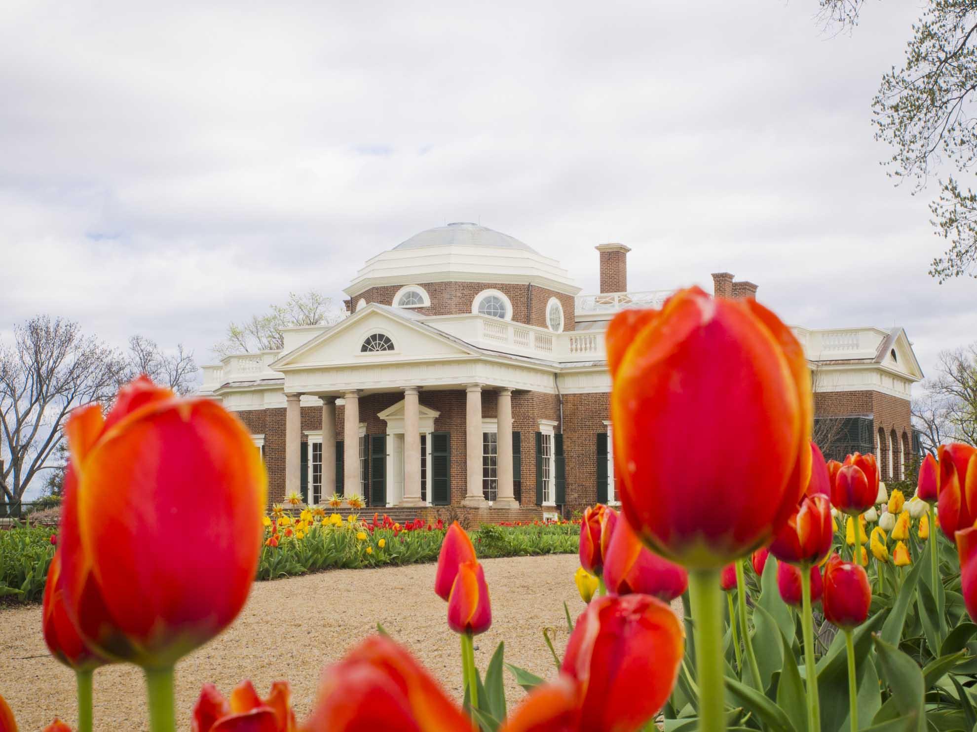 Monticello tulips