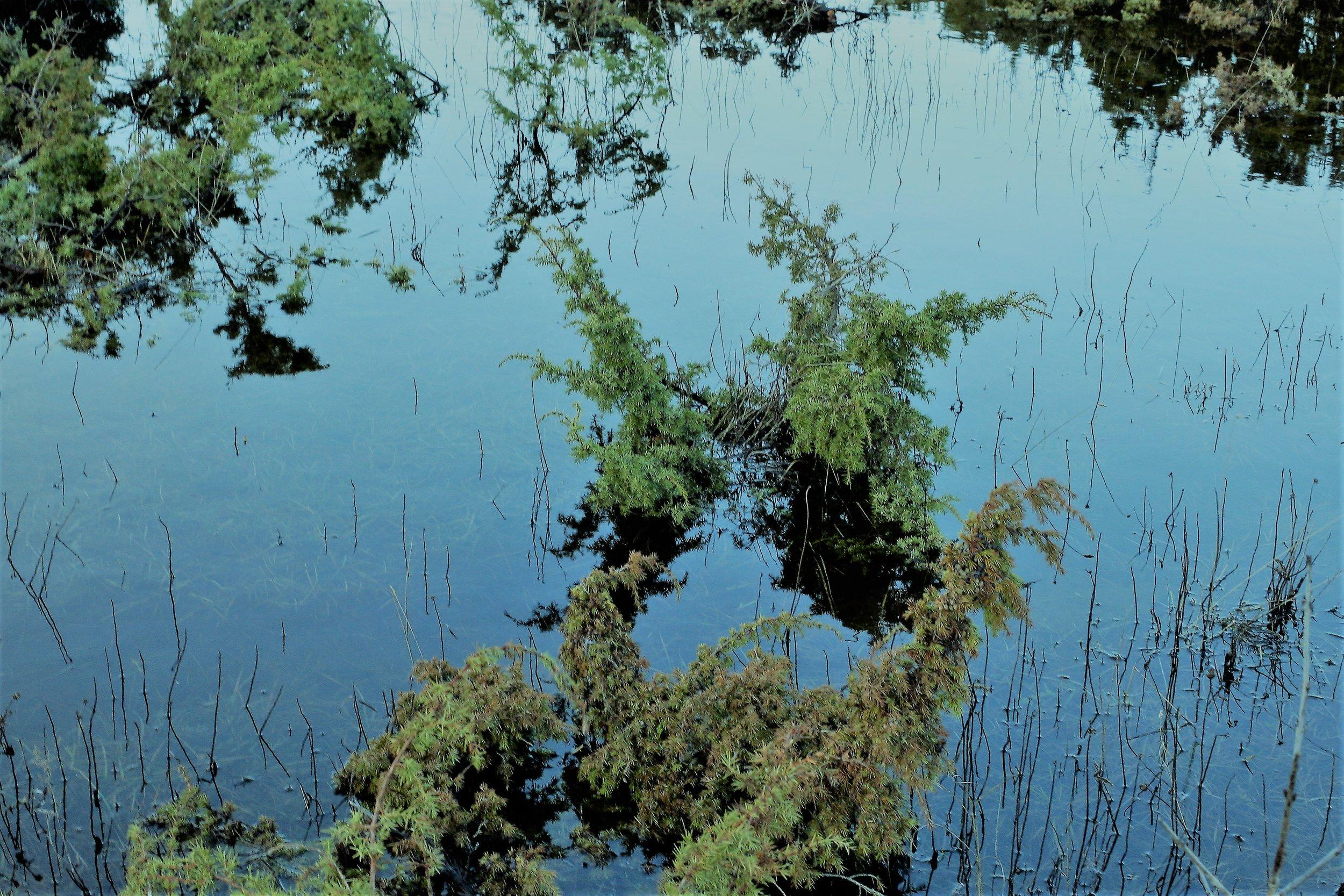 Juniper floods in Saaremaa