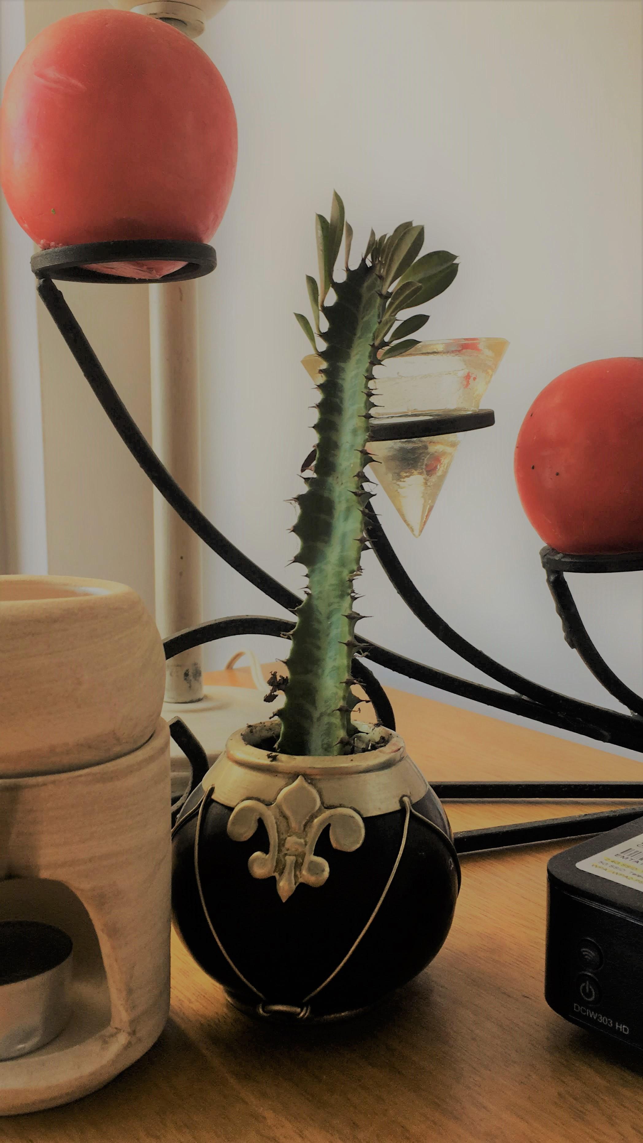 cactus maceta mate.jpg