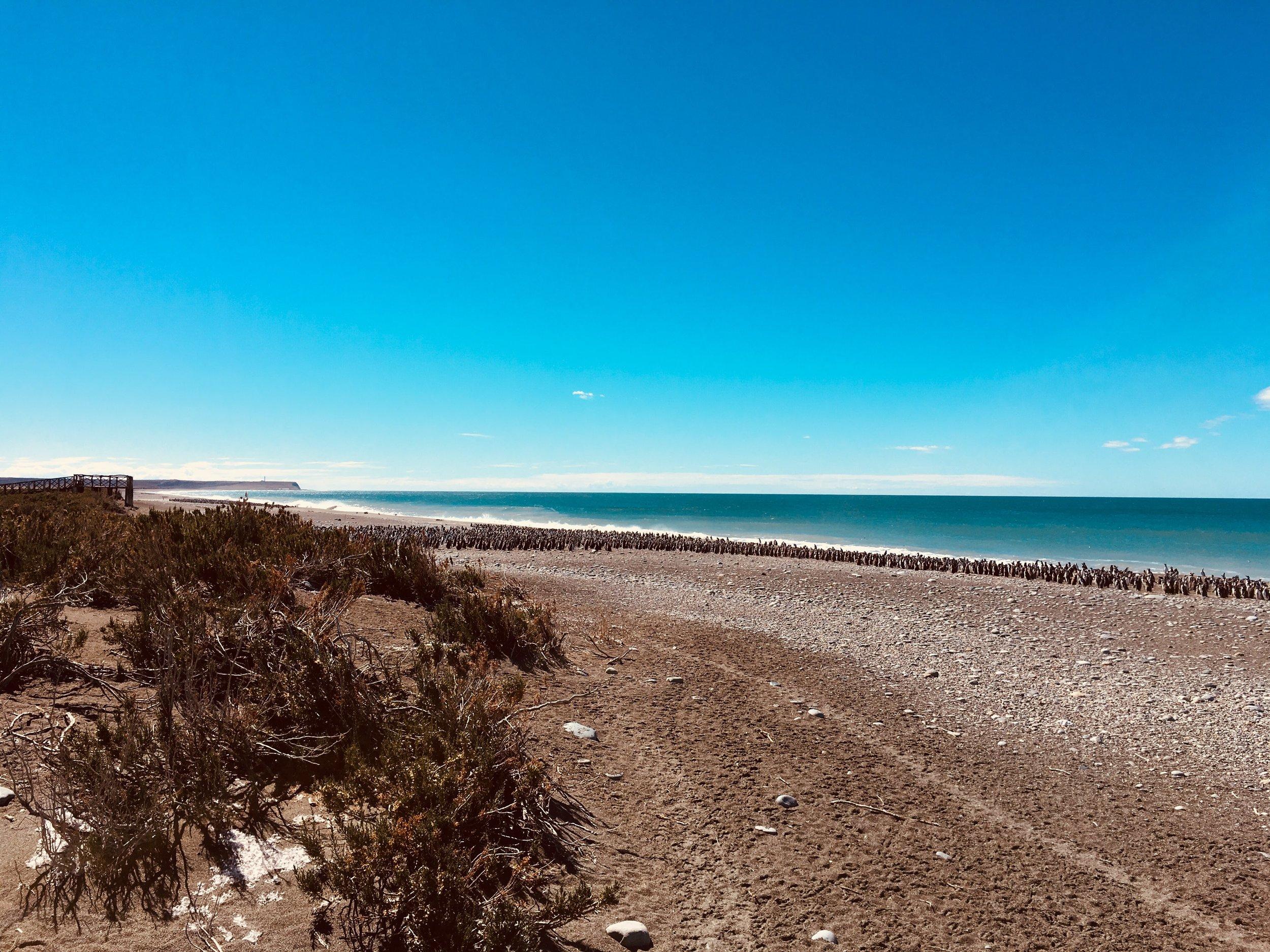 playa patagonia beach.jpg