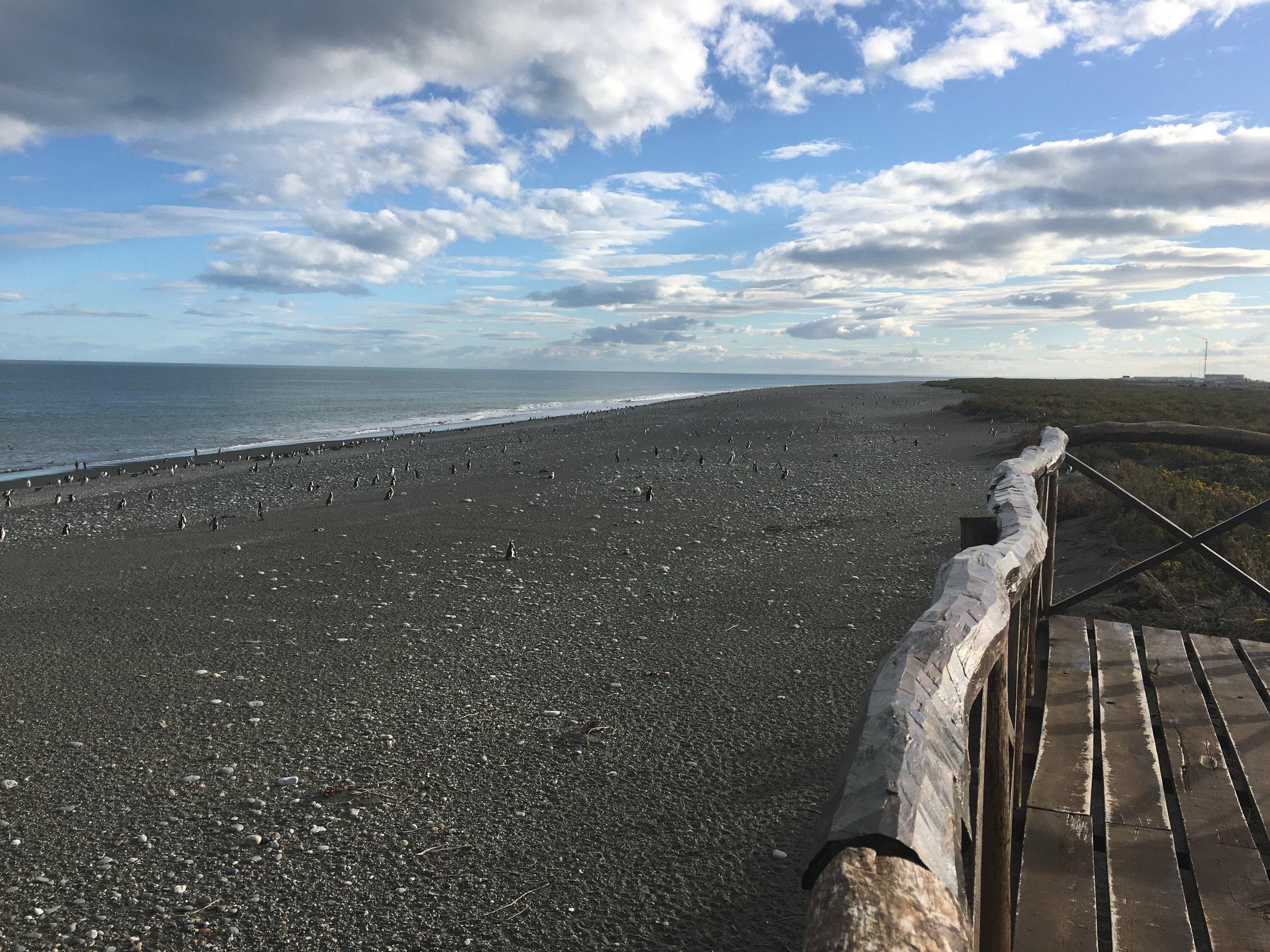 sea patagonia.jpg