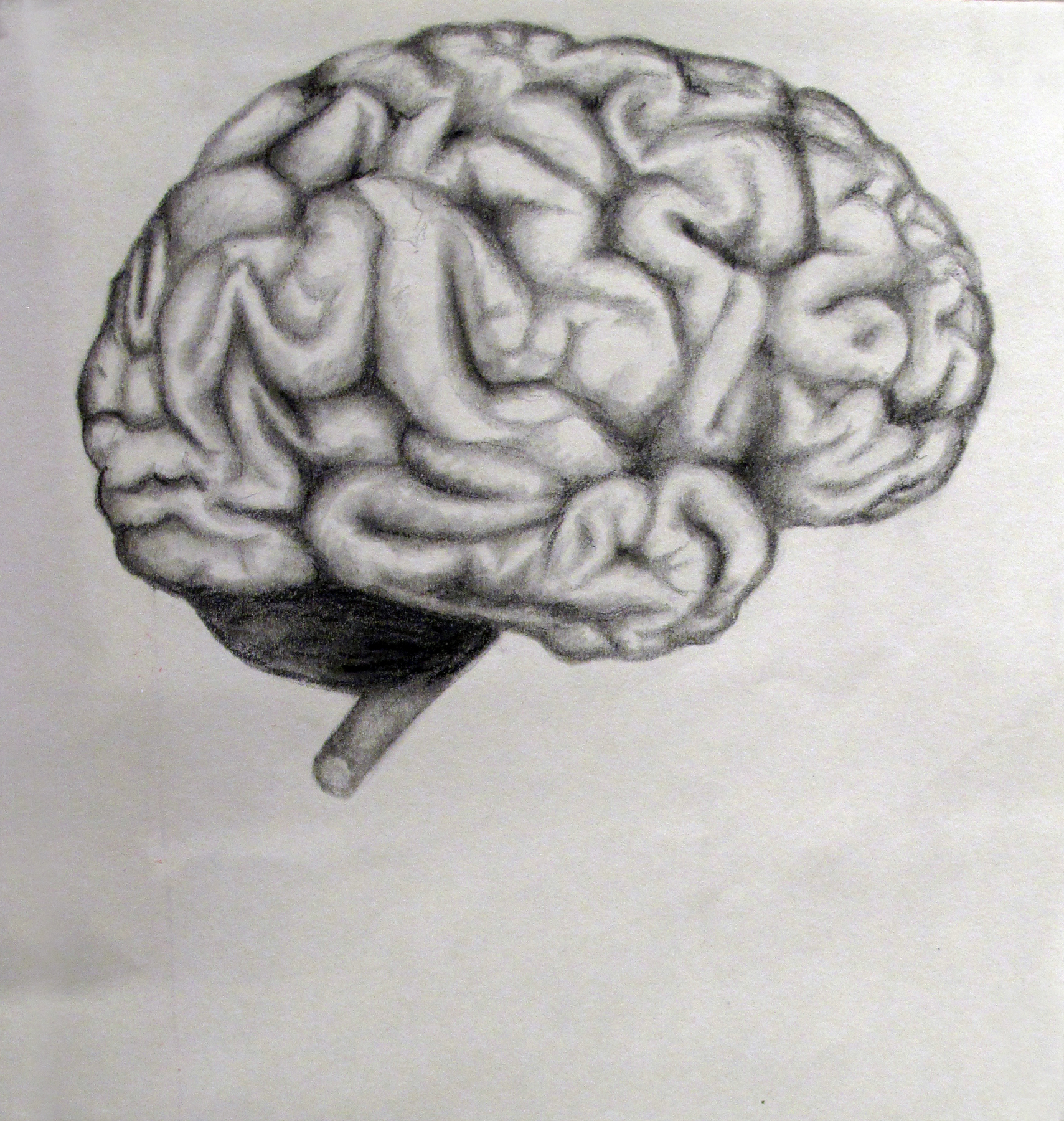 Deniz B-Brain study.JPG