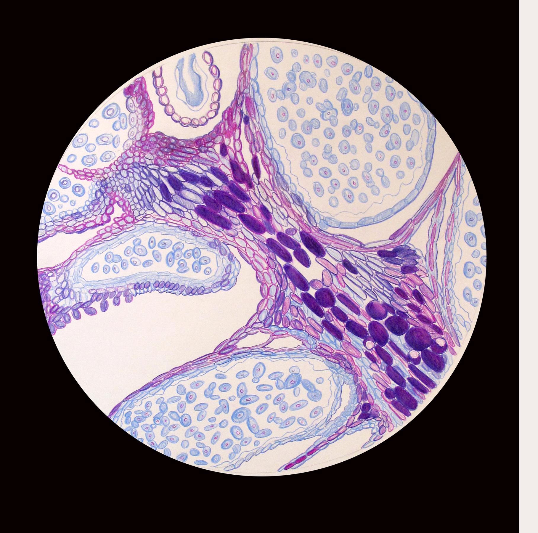 Eli-Long microscope Drawing.jpg