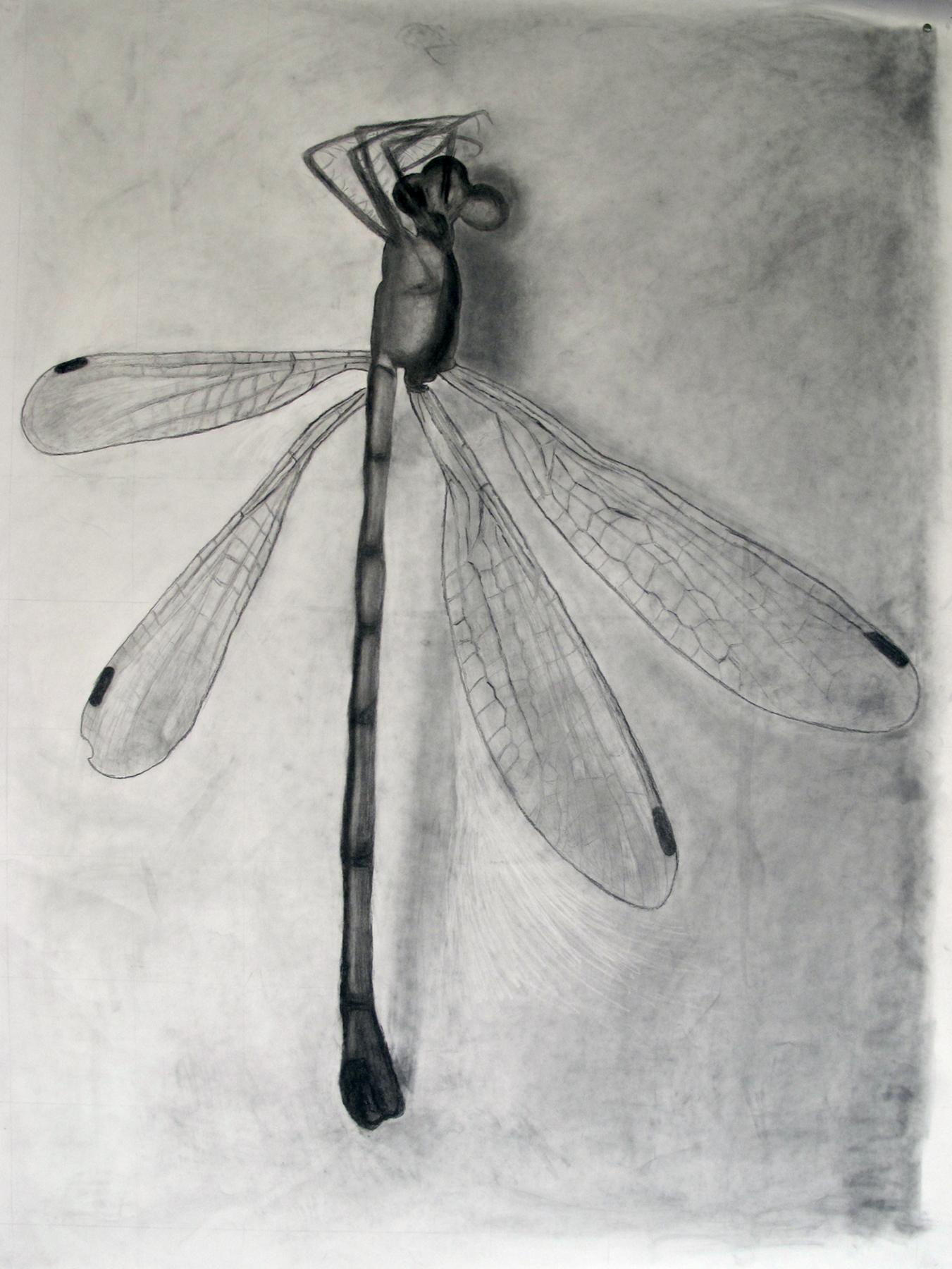 Jocelyn-dragonfly.jpg