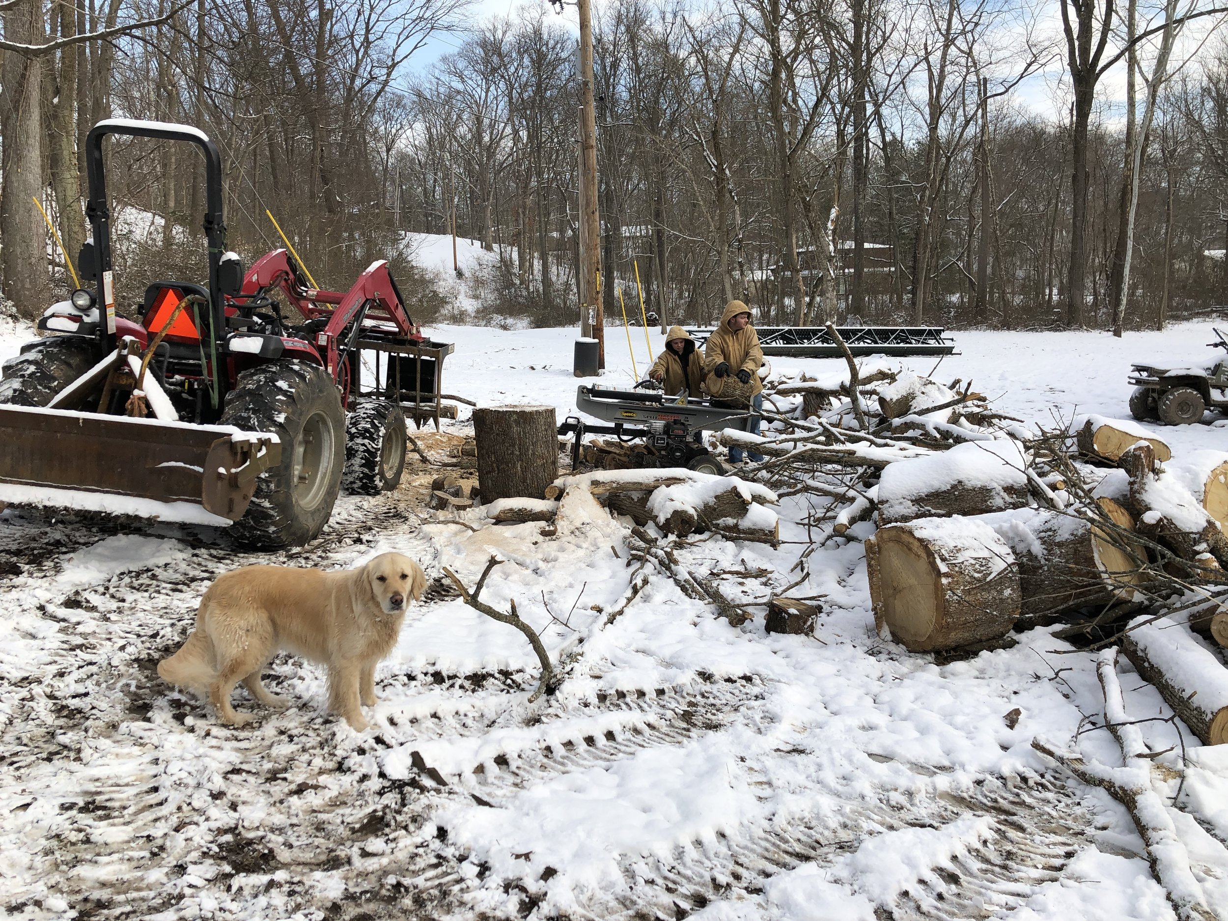 Toby the Dog wondering why the heck I am not working…. Nate and LC splitting wood.
