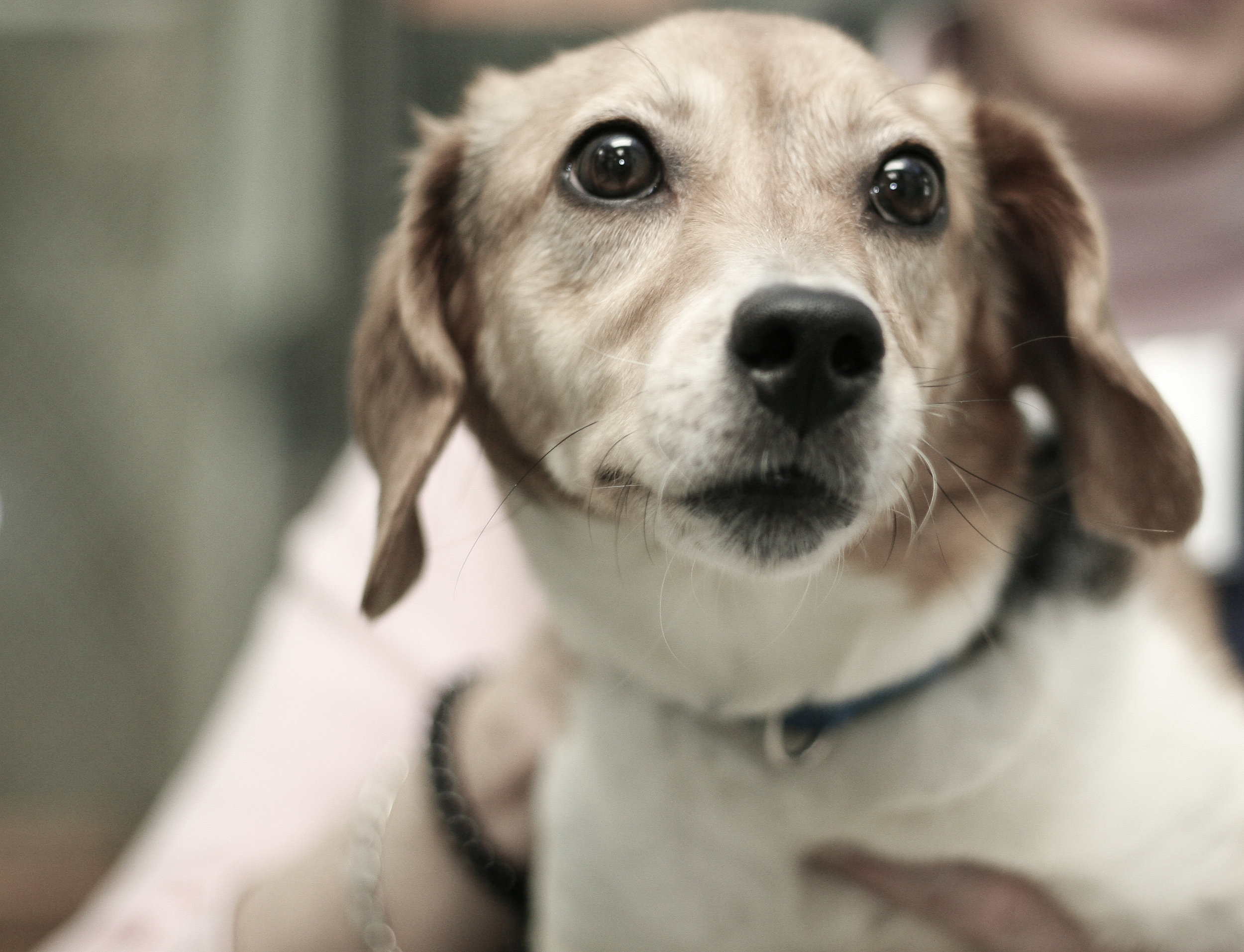 beagle2TN.jpg
