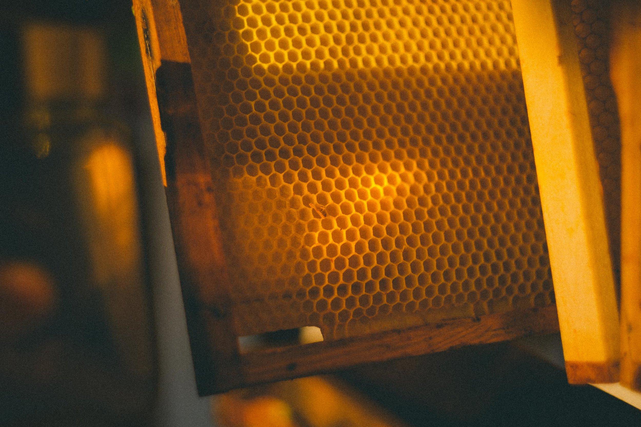 Karoline Greimel's Honey-21.jpg
