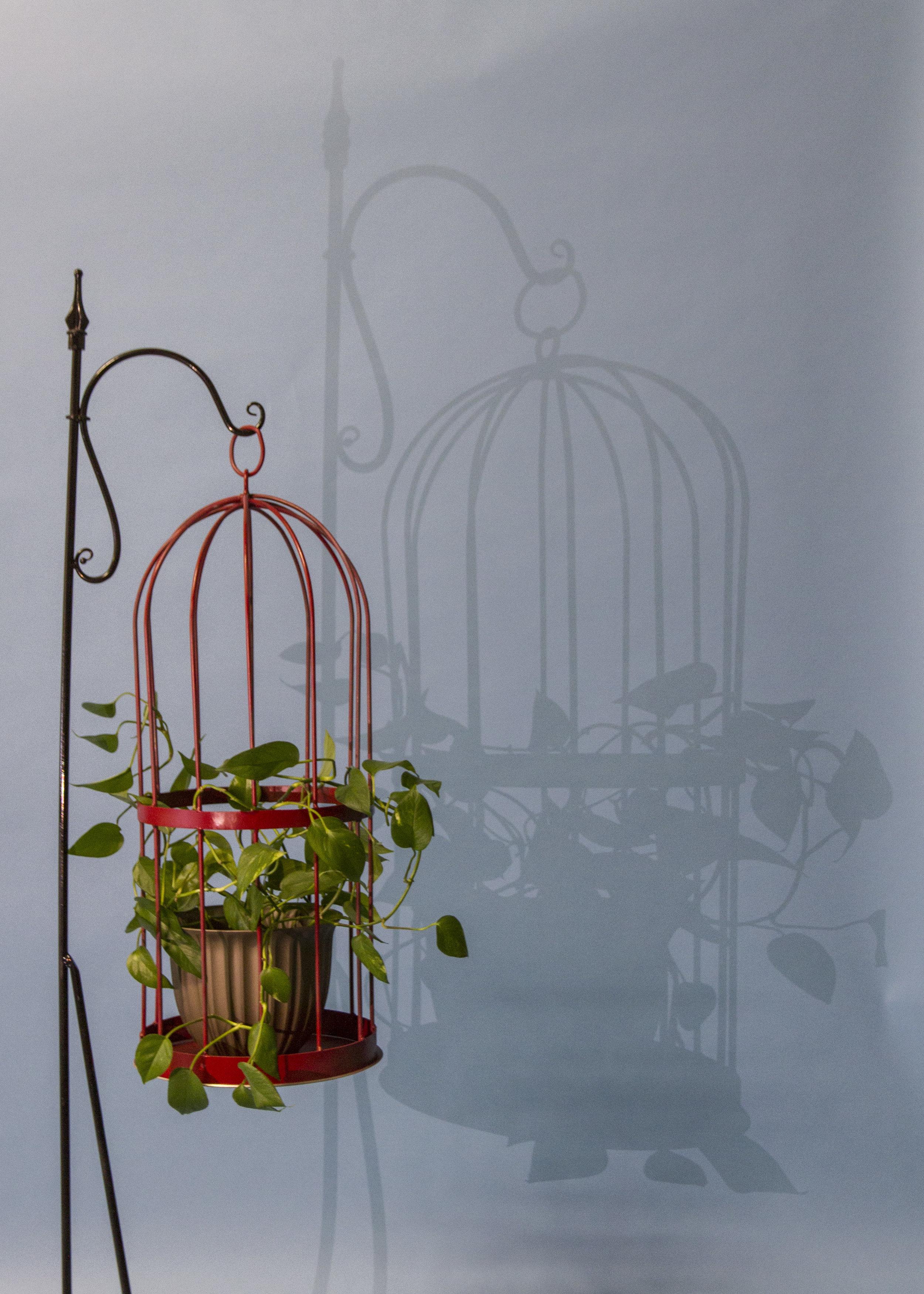 PlantCageShadow.jpg