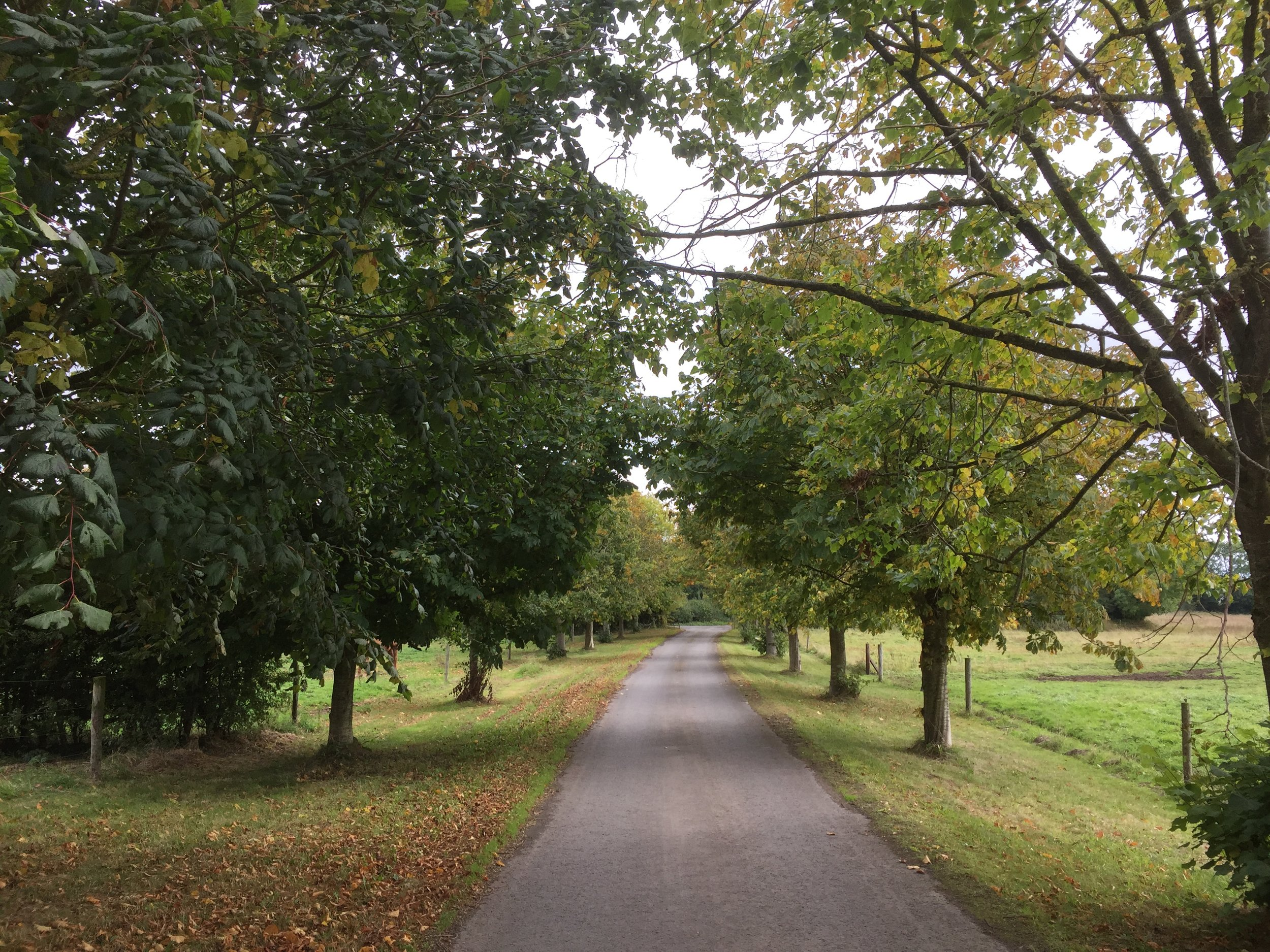 Chestnut and lime tree avenue in late September 2018 after an unusually hot summer with temperatures that went up to 29 degrees centigrade in June.