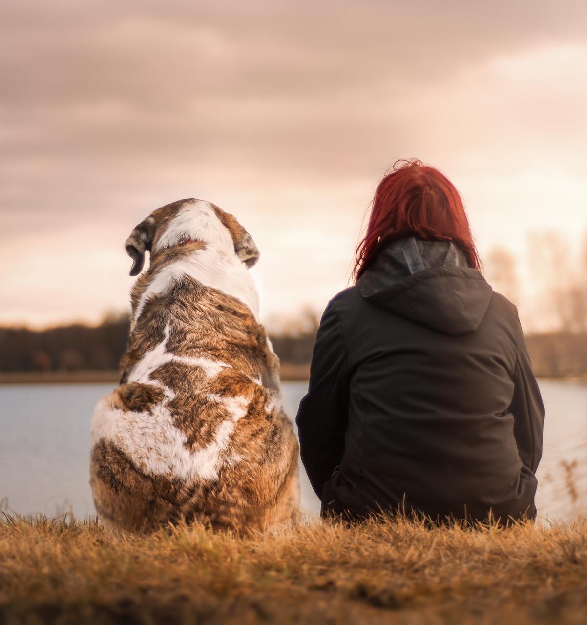 Hero-dog-story-suzanne-winterly.jpg