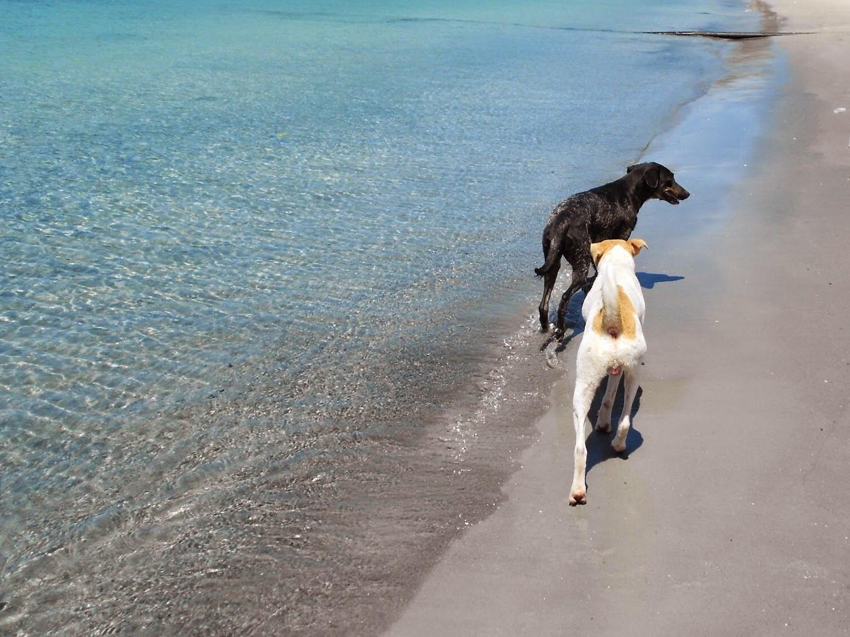 lifesthayle-arraial-do-cabo-cachorros.JPG