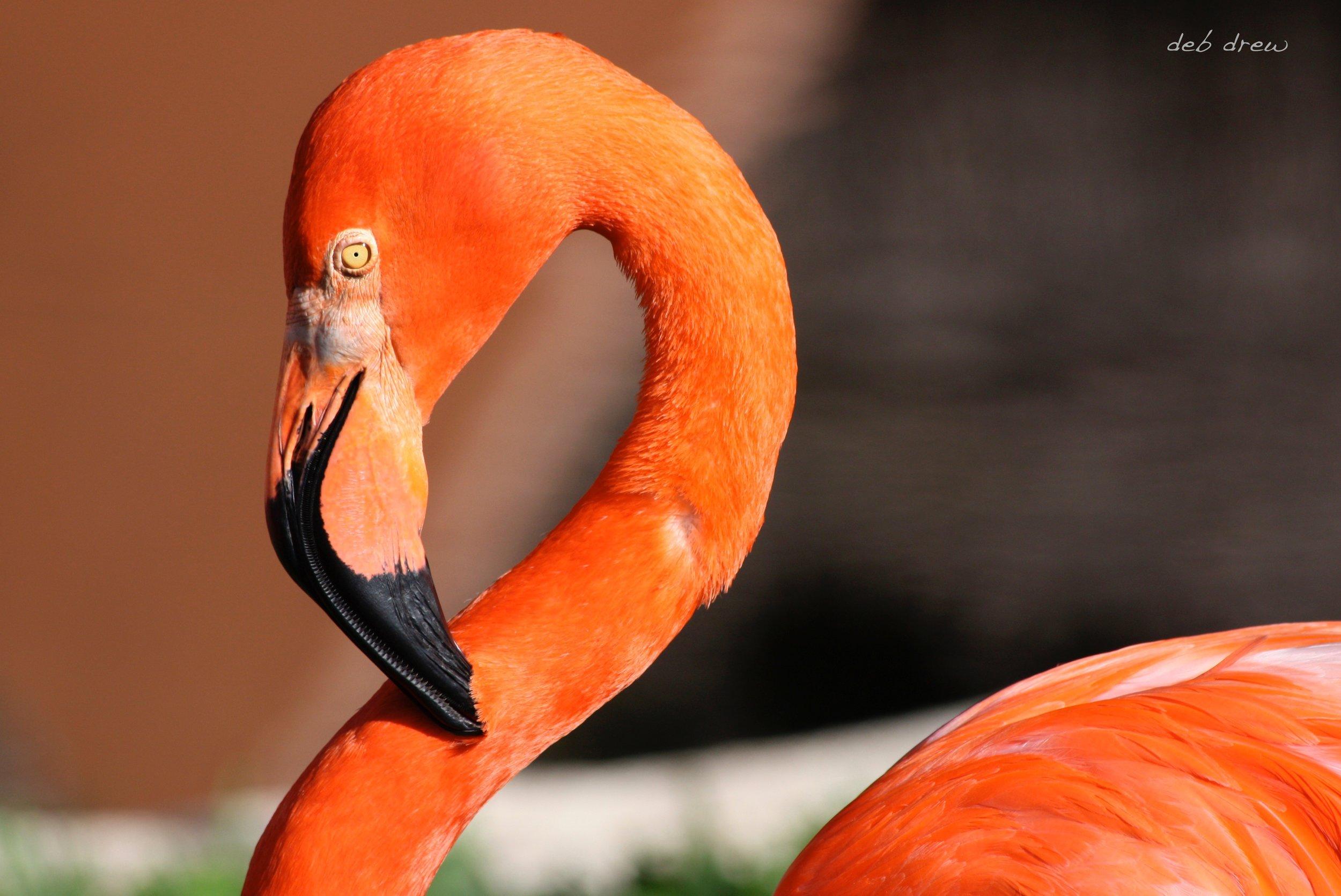 Bird Flamingo.jpg