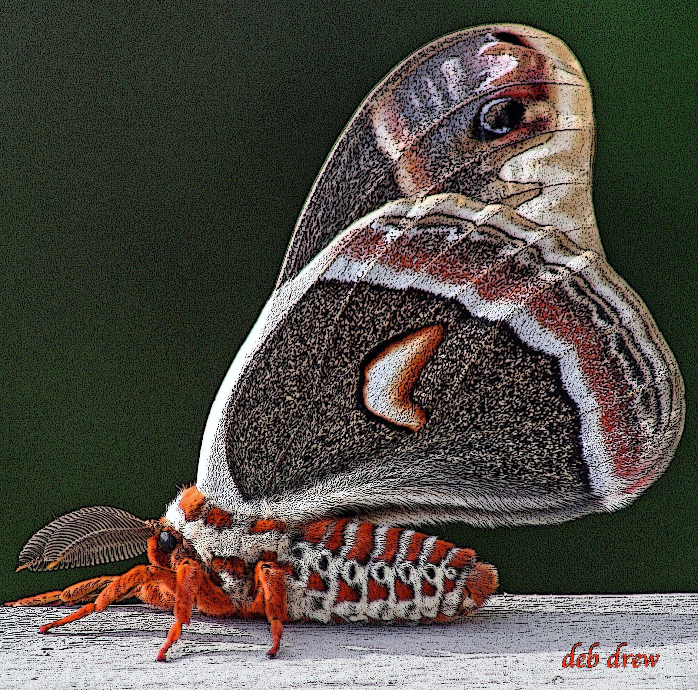 Butterfly (2).jpg